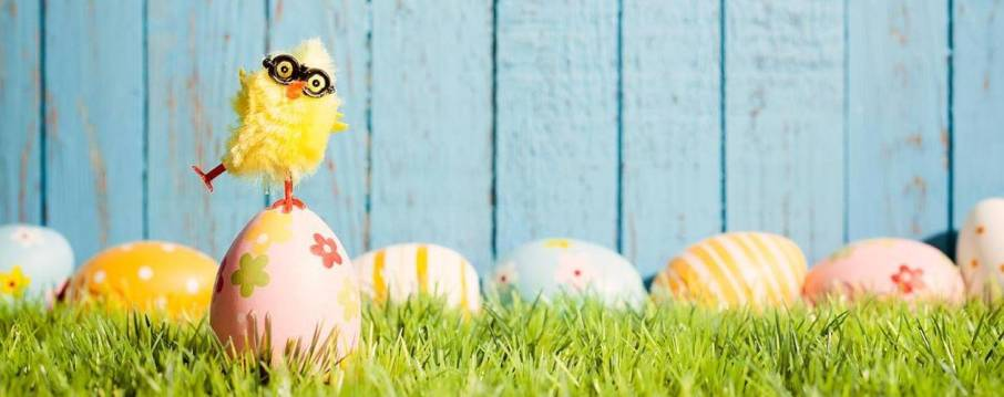 easter-chick-and-eggs-2__hero